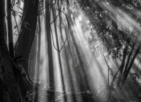 cloudforest_02_smkanephotos
